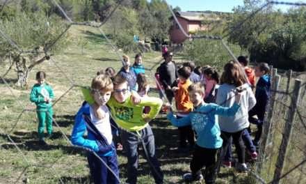 Campamentos de inglés en verano: Navarra e Irlanda