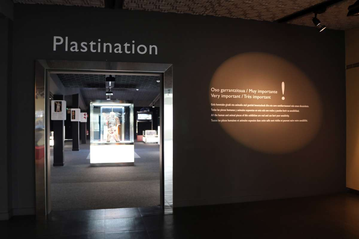 plastination_san_Sebastián_donostia_10