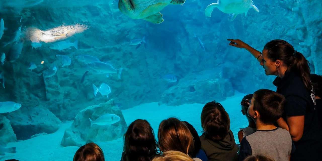 Sorteo de entradas para el Aquarium de Biarritz 2019