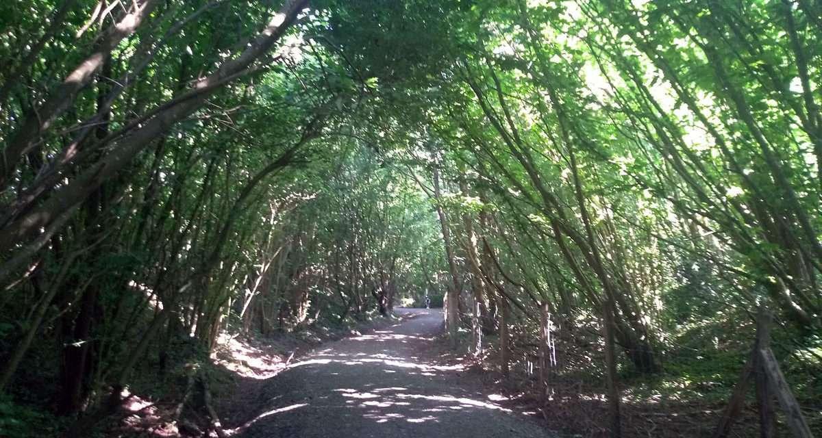 Paseo por el parque ecológico de Plaiaundi